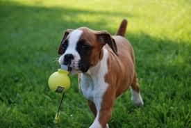 Boxer jeu apporte