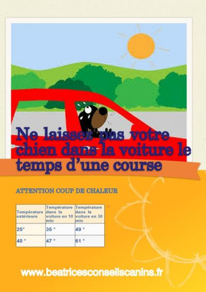 Canicule voiture