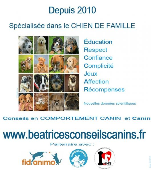 Education beatricesconseilscanins