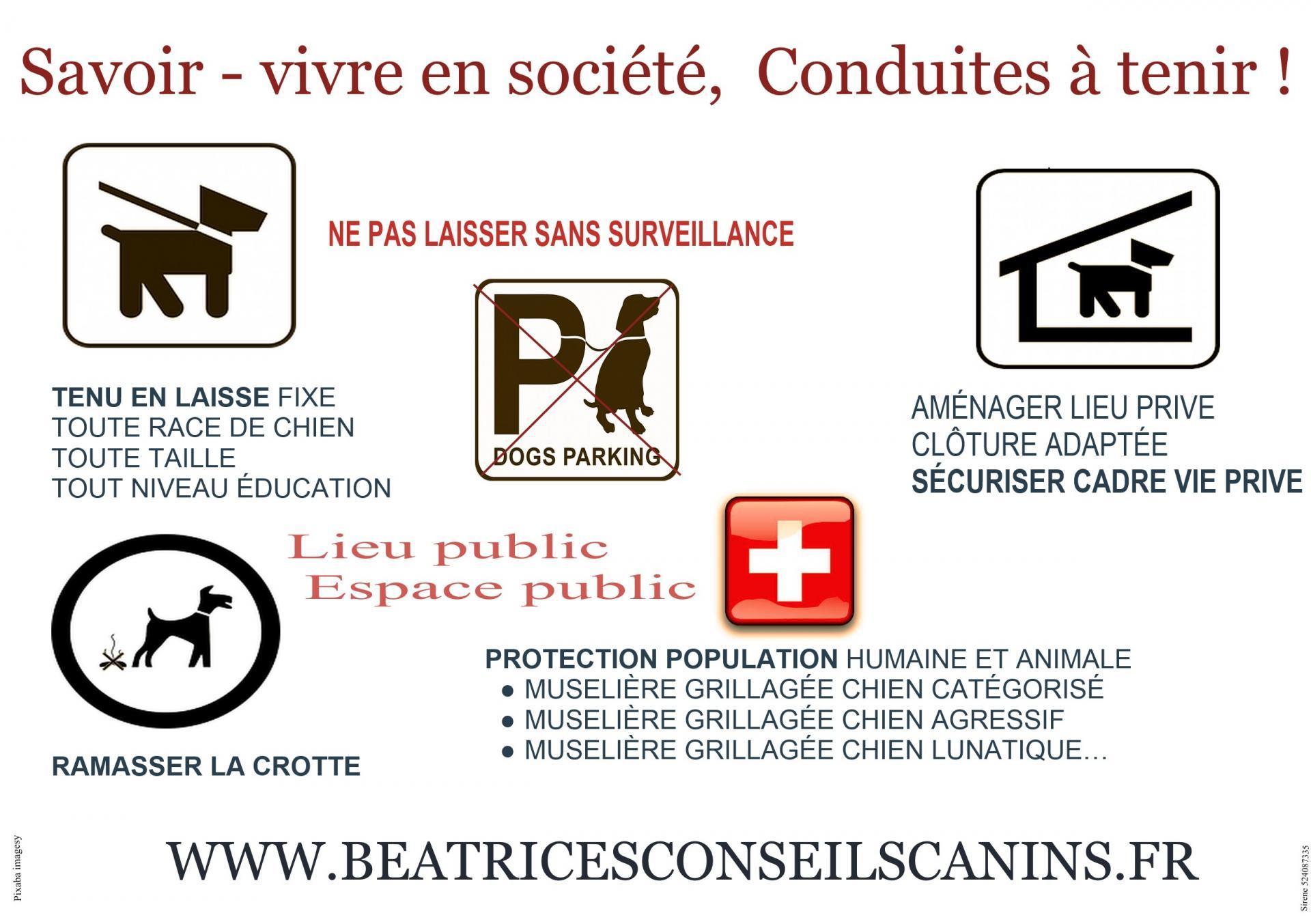 Prevention chiens des villes