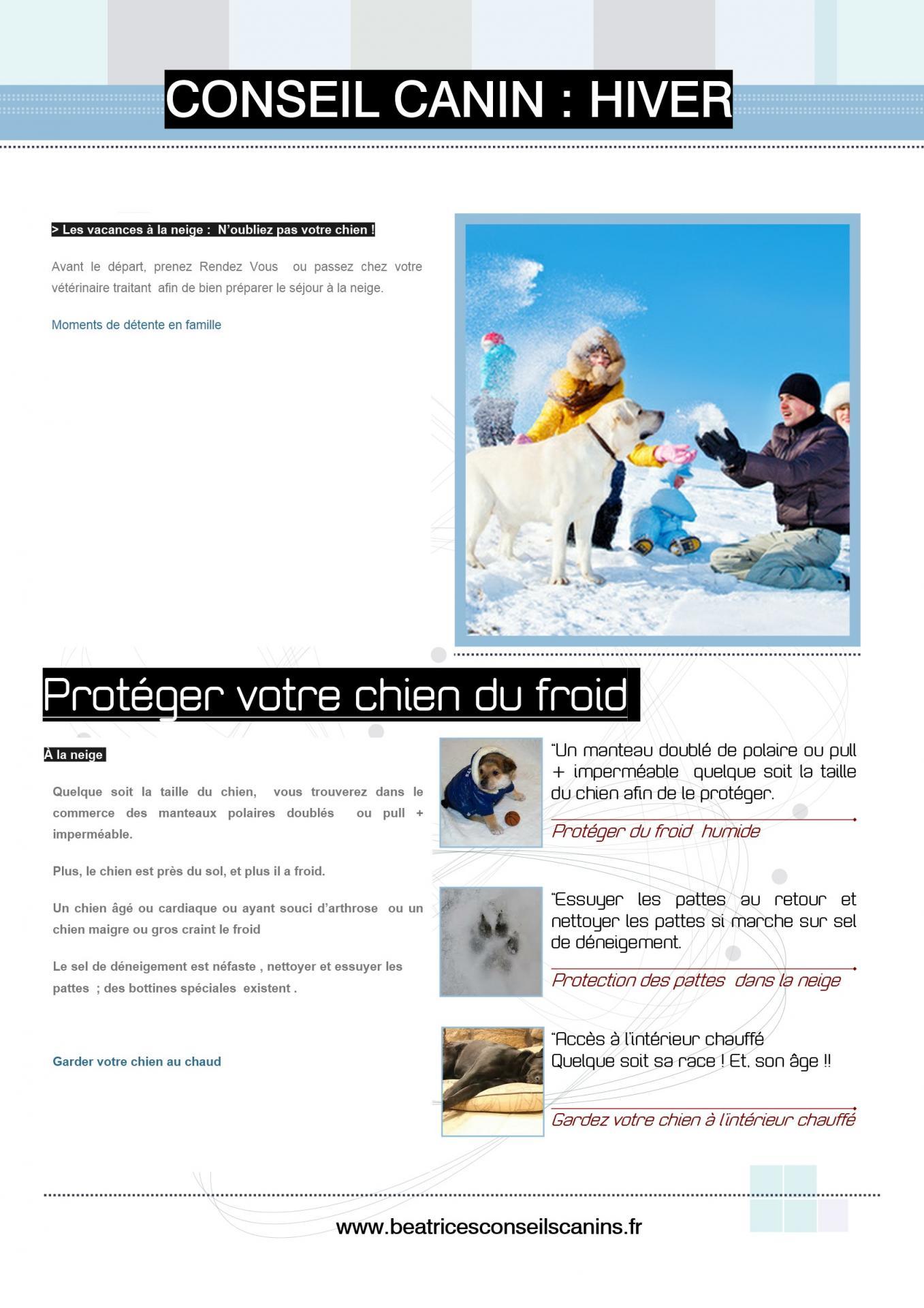 Proteger chien du froid