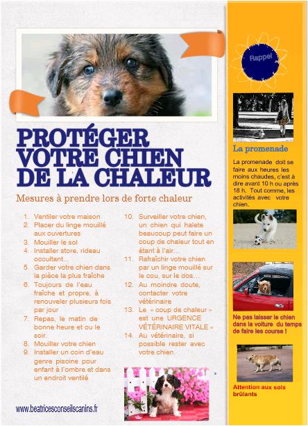Proteger le chien de la chaleur