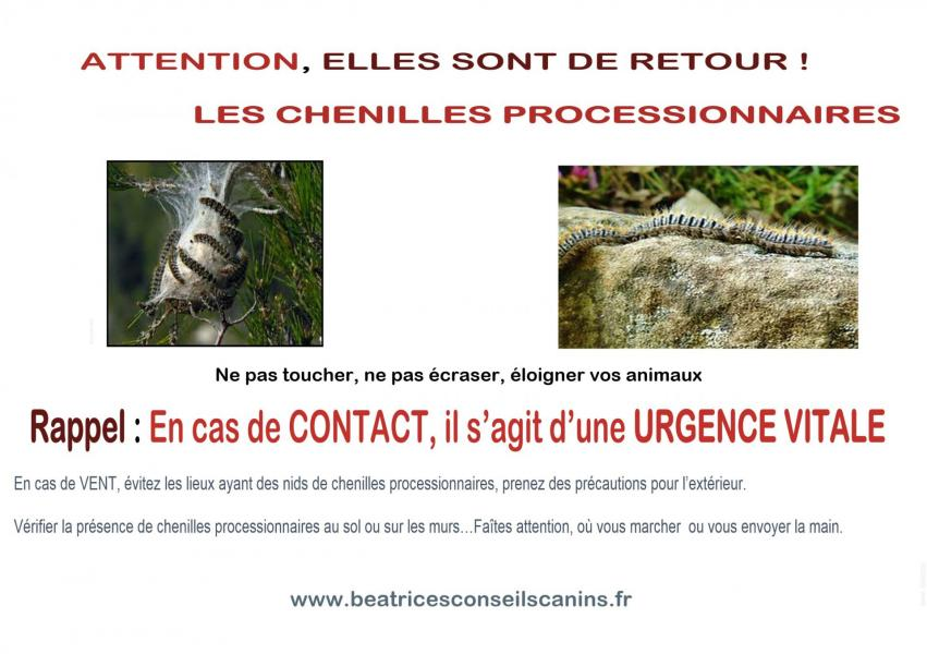 Attention chenille processionnaire
