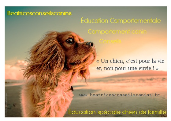 Carte beatricesconseilscanins