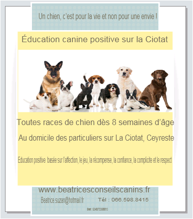 club canin education positive