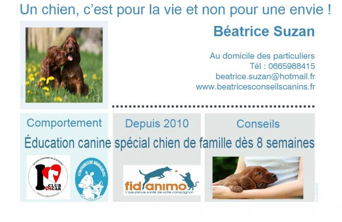 Carte education chiot