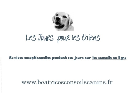 Carte pub les jours pour les chiens beatricesconseilscanins