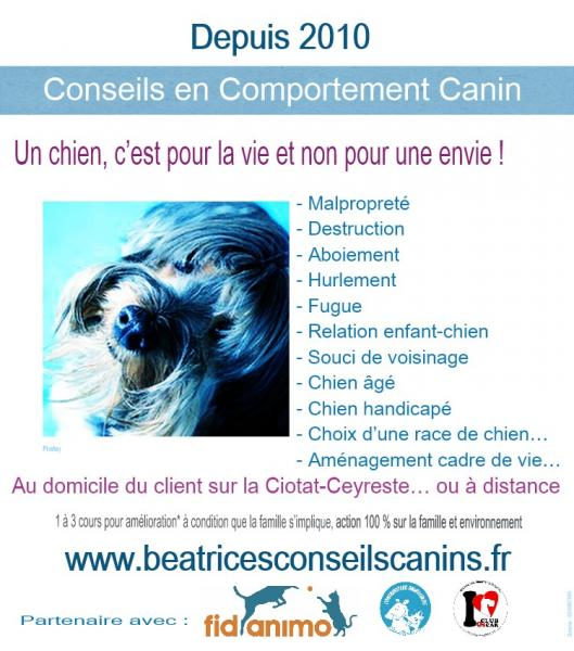 Comportement canin beatricesconseilscanins