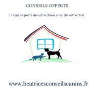Conseils offerts en cas de perte chien chat