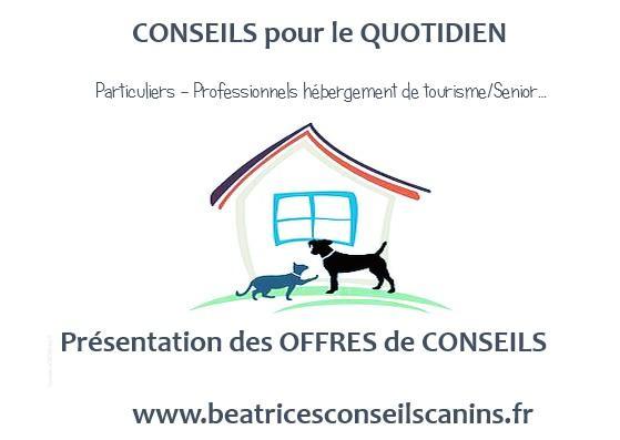 Atelier en ligne sur le chien - WEBINAIRE