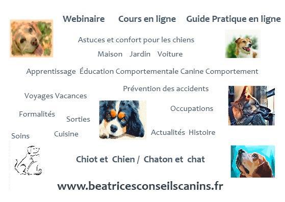 Guide pratique cours webinaire en ligne