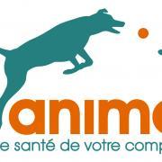 Logo fidanimo assurance chien chat