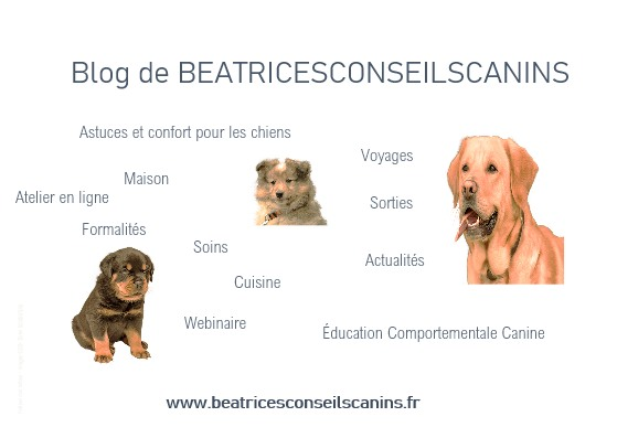 BLOG de BEATRICESCONSEILSCANINS