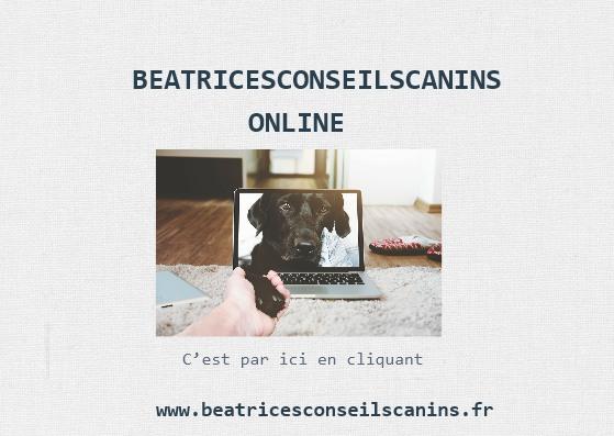 Pub beatricesconseilcanins online