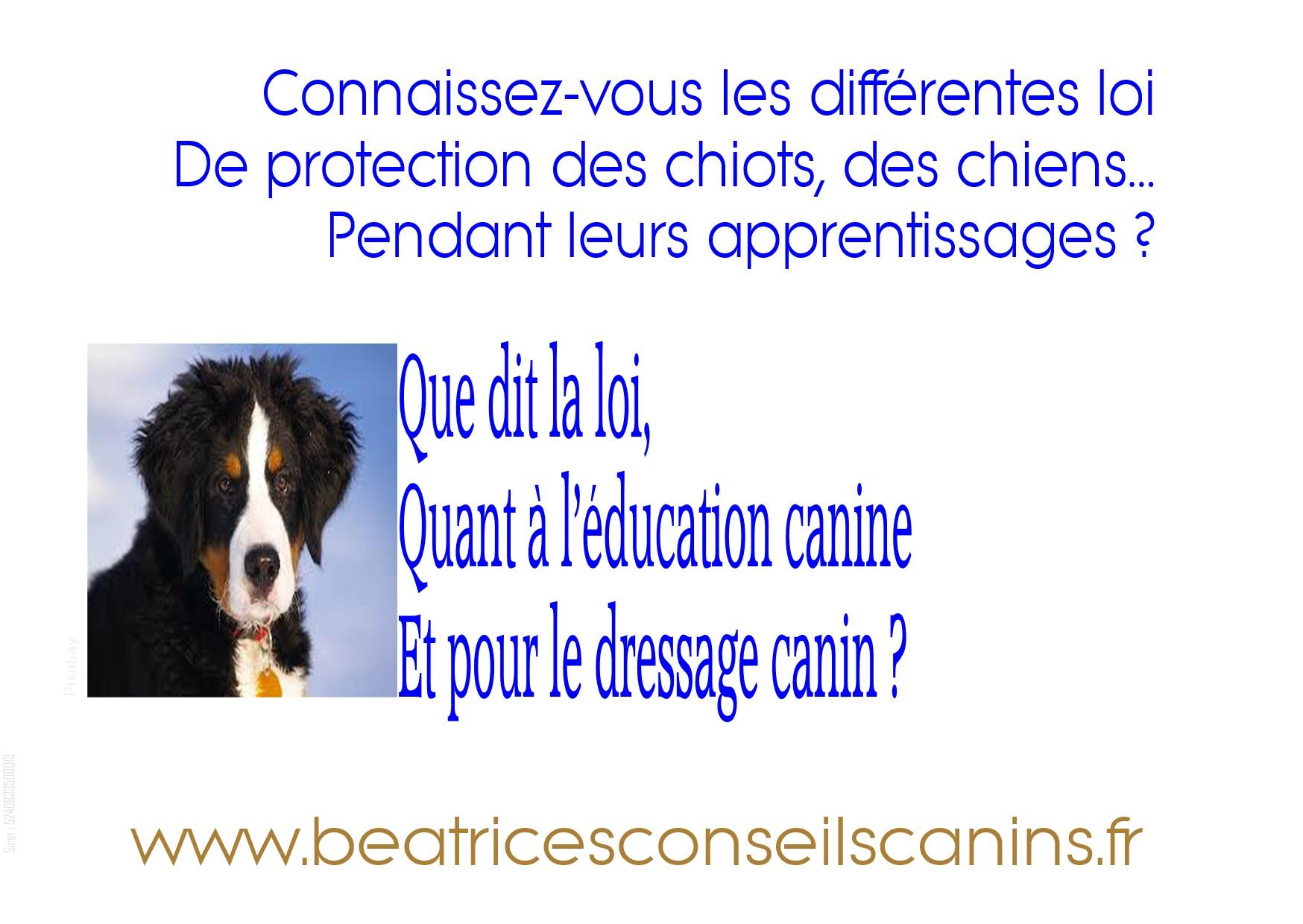 que dit la loi sur les activit u00e9s de dressage canin