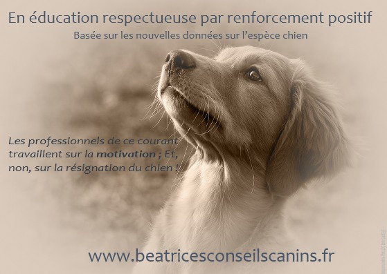 Education canine positive dès 8 semaines