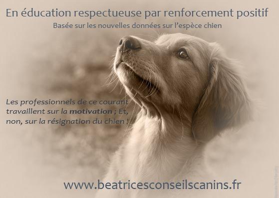 Sensibilisation education respectueuses2