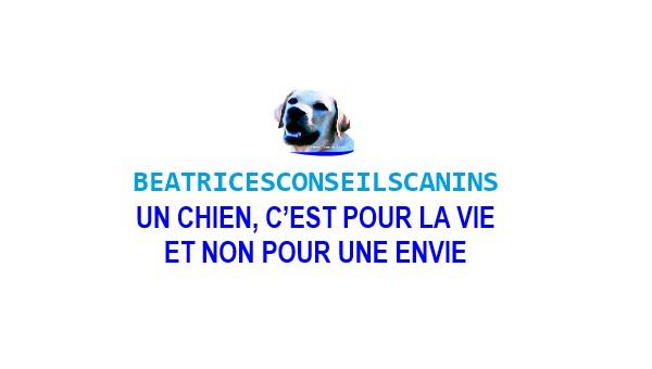 Béatrice 'Suzan Conseils Canins